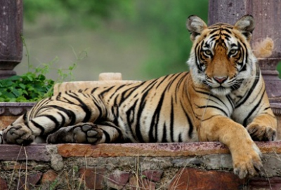 Tourist Places in Ranthambore